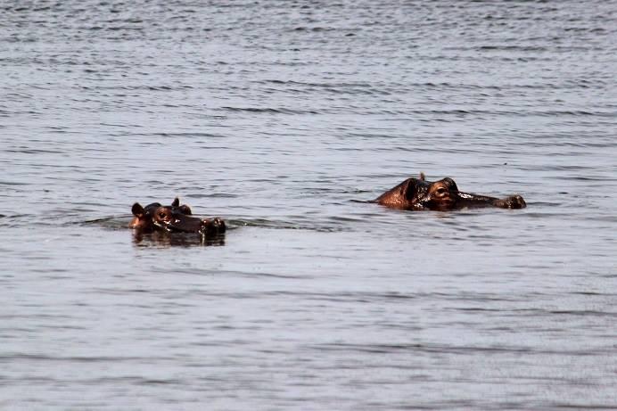 jollyrhinoceros' return to Rwanda OZAPATO WELT SANTOS
