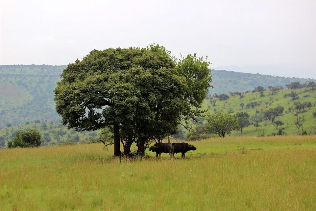 jollyrhinoceros' return to Rwanda